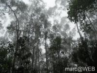 Caldeirao_Verde