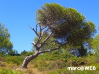 Algarve (26).JPG