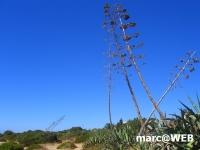 Algarve (5).JPG