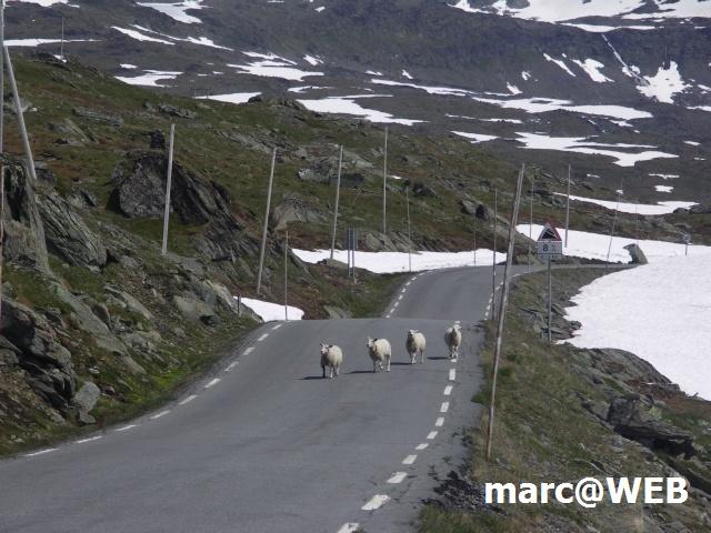 Norwegen (52).JPG