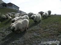 Zermatter_Rothorn