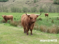 Schottland (33)