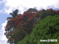 Seychellen (54).JPG