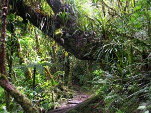 Forêt de Bébour auf La Réunion