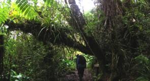 Weg durch den Forêt de Bébour