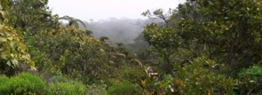 Regenwald of La Réunion