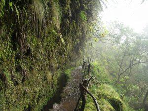 Caldeirão Verde auf Madeira