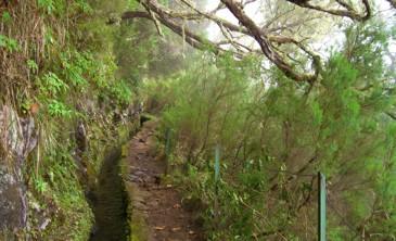Der Weg durch den Nebelwald zum Caldeirao Verde
