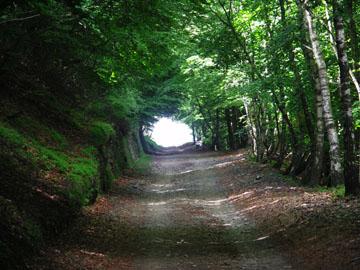 Der Weg führt durch Birkenwälder