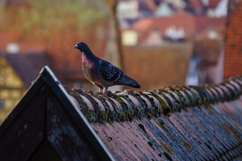 Auf den Dächern von Rothenburg