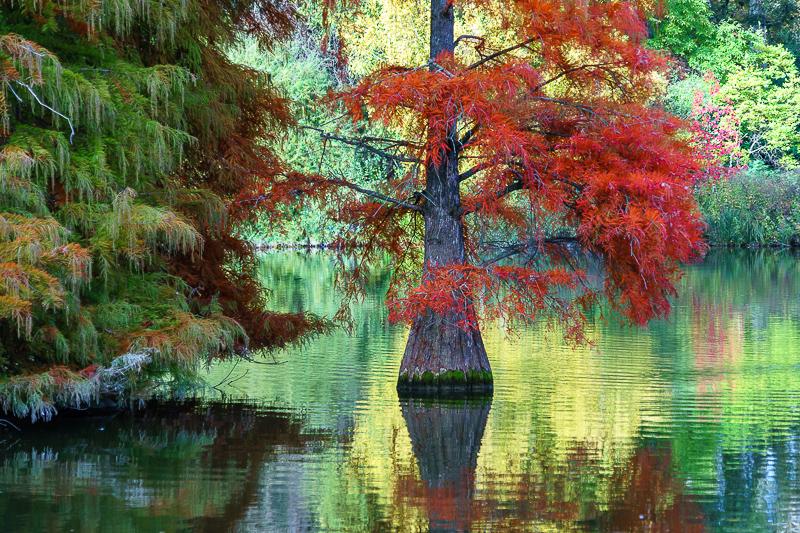 Herbstlaub im Luisenpark